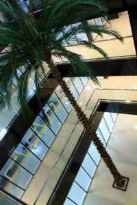 Artificial & Preserved Palm Trees available in Dubai