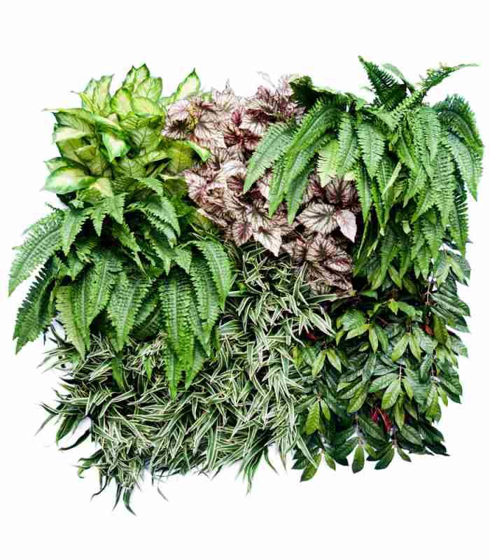 artificial-green-wall-sumatra-dubai