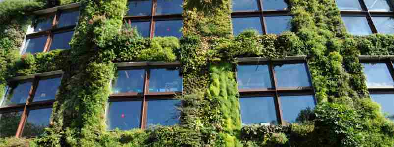 Artificial Green Walls available in Dubai