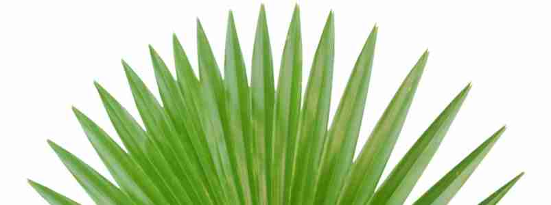 Preserved & Artificial Palm Trees available in Dubai