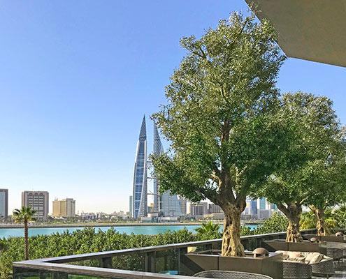 uv olive trees middle east