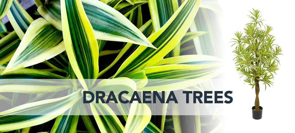 Shop artificial Dracaena Trees Dubai