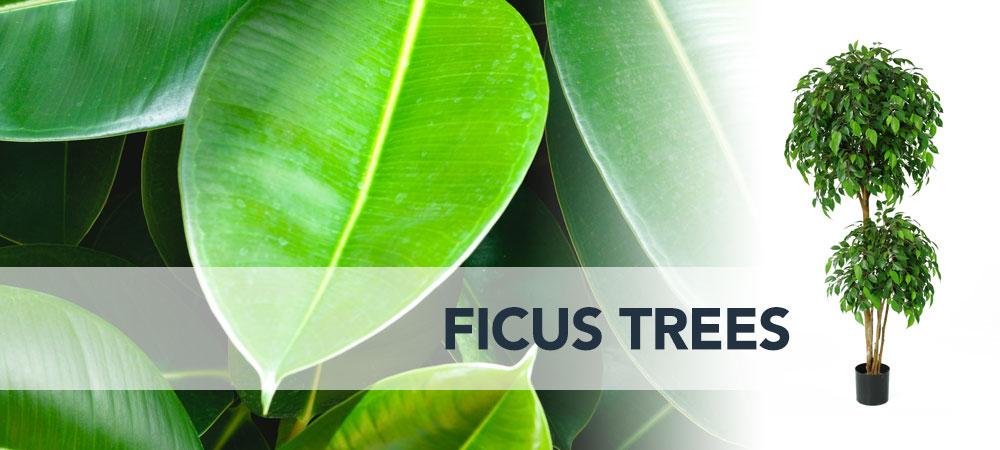 Shop artificial Ficus Trees Dubai